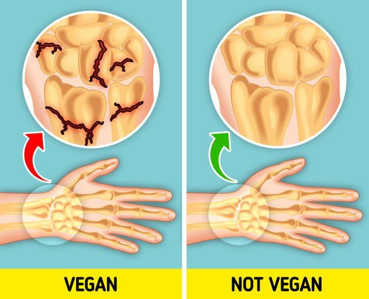 oase casante la vegani versus oase sanatoase la non vegani