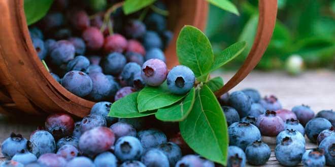 Acai Berry: 6 Beneficii dovedite (inclusiv pentru piele, slabire, digestie)